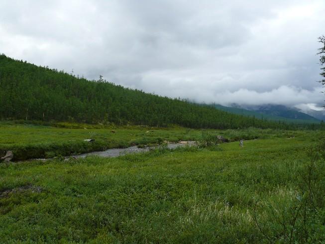 Kalnu ielejas ainava